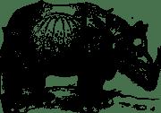 rhinoceros-of-durer-3133131_960_720